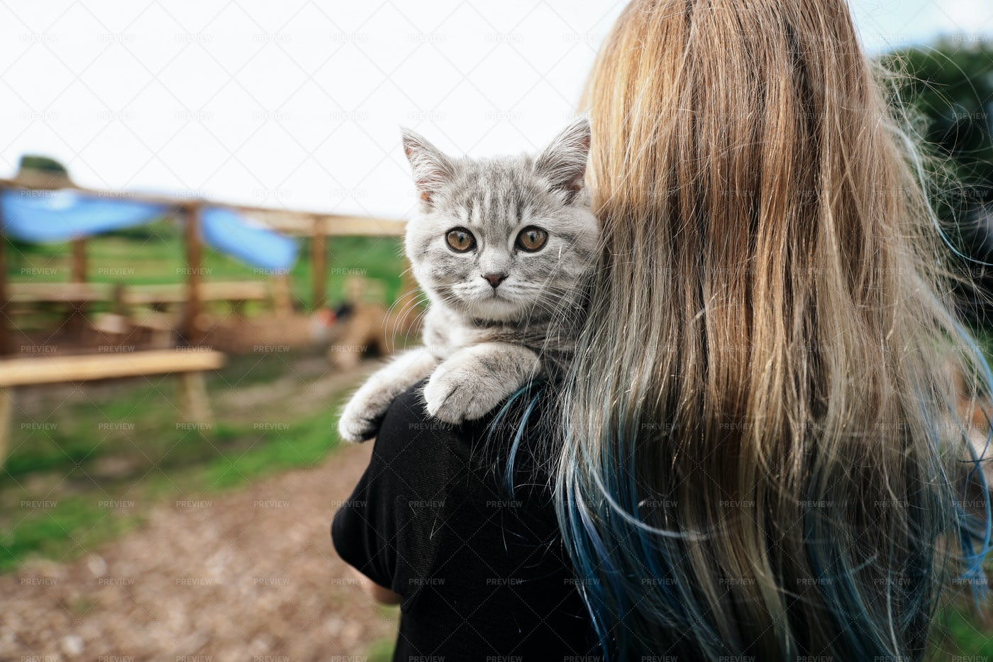 Kitten With The Owner: Stock Photos