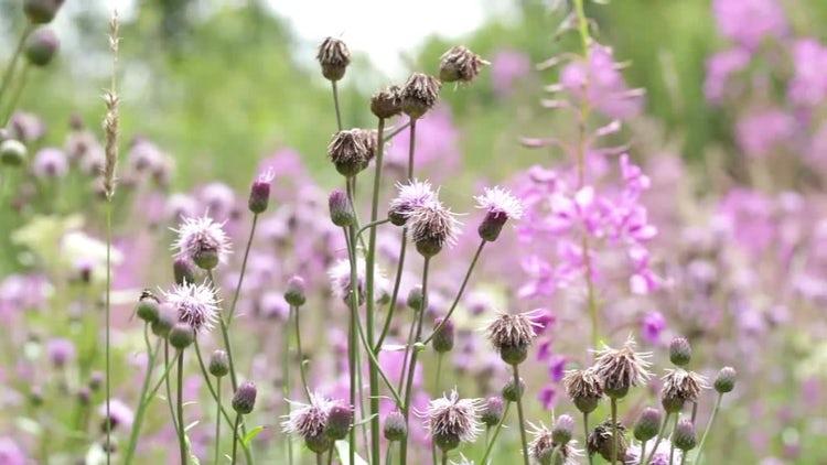 Field Flowers: Stock Video