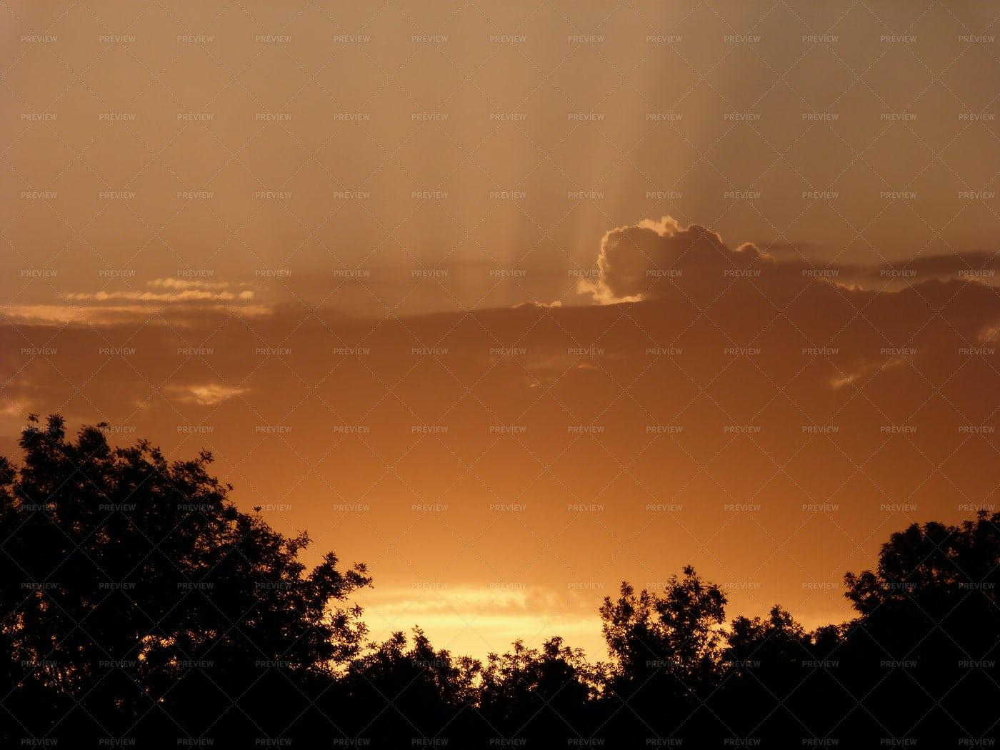 Sunrise Beyond The Trees: Stock Photos