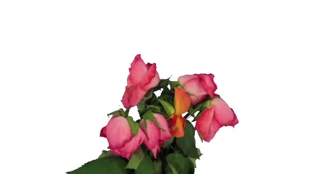 Dying Rose Bouquet, Time-Reverse: Stock Video
