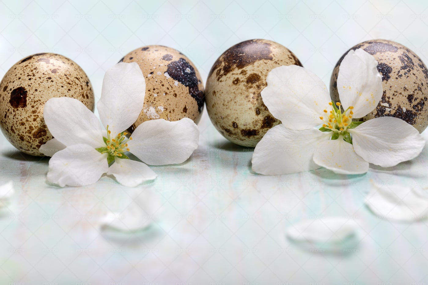 Easter Quail Eggs.: Stock Photos
