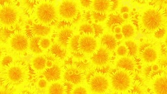 Flowers Background Loop: Motion Graphics