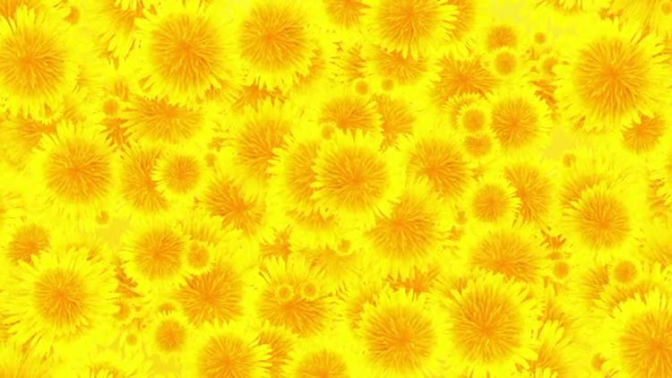Flowers Background Loop: Stock Motion Graphics