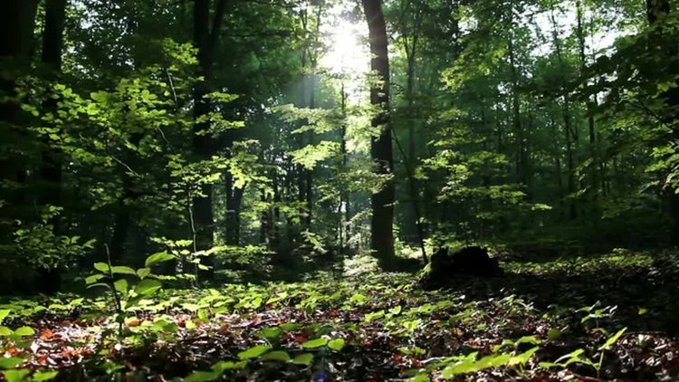 Green Forest Background: Stock Video