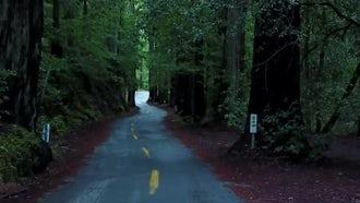 Redwood Trees: Stock Footage