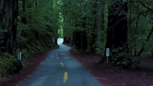 Redwood Trees: Stock Video
