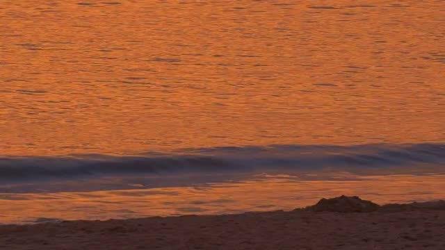 Golden Ocean Beach Waves: Stock Video