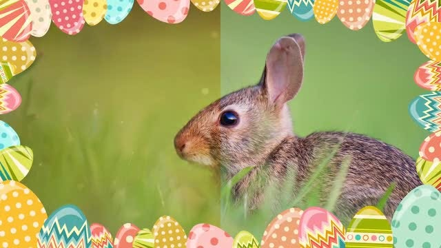 Cartoon Easter Eggs Frame Pack: Stock Motion Graphics