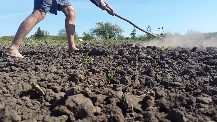 Cultivating Land With A Rake : Stock Video
