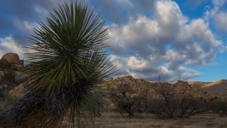 Time-Lapse Of Yucca In Arizona: Stock Video