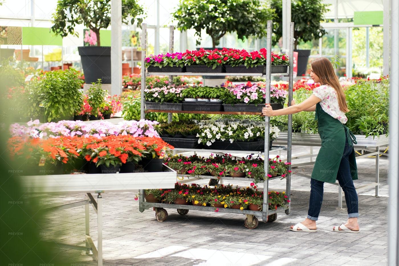 Pushing A Flower Cart: Stock Photos