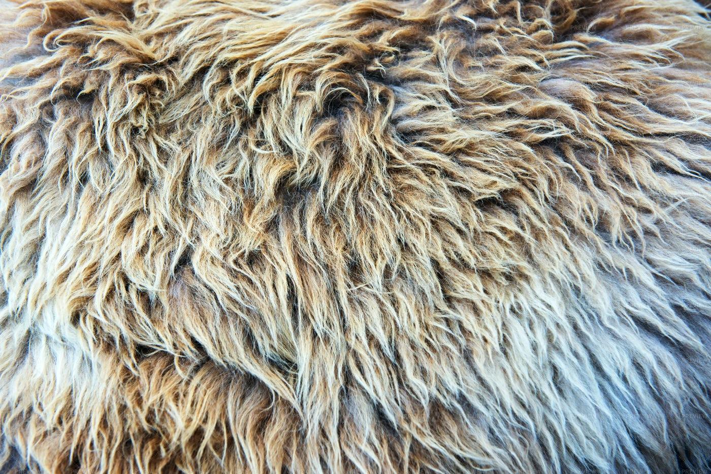 Fur Texture Close-Up: Stock Photos