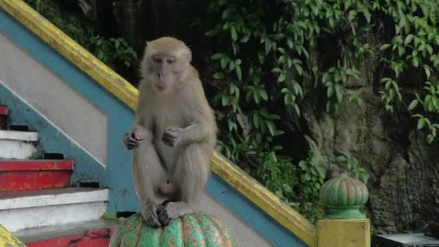 A Man Feeding A Monkey : Stock Video