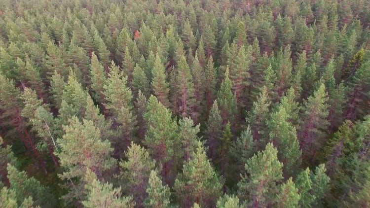 Flying Over Forest Aerial: Stock Video