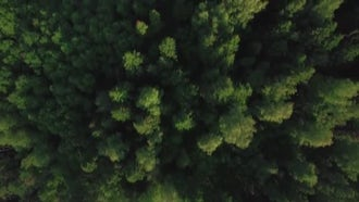 Flying Over Green Woods: Stock Video