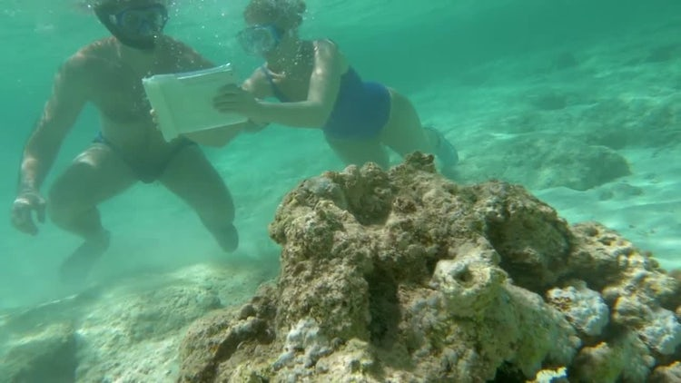 Taking Photos Of Coral Reef: Stock Video