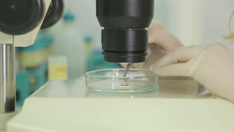 Research Laboratory: Stock Video