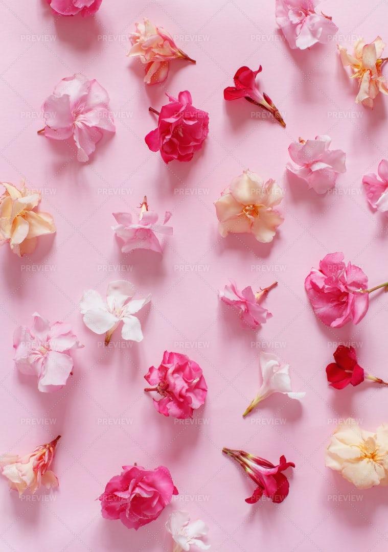 Pink Flowers: Stock Photos