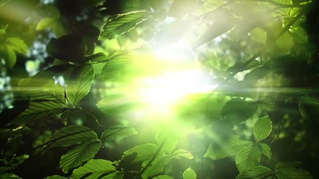 Light and Leaves: Stock Motion Graphics