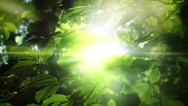 Light and Leaves: Motion Graphics