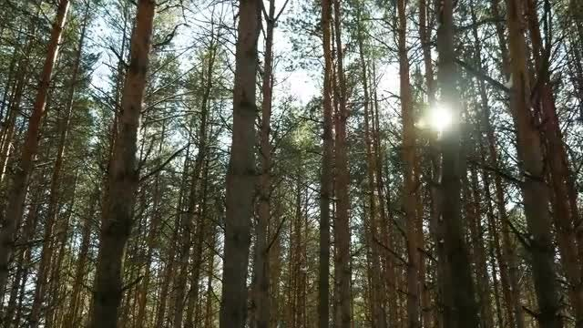 Trunks Of Trees In Forest: Stock Video
