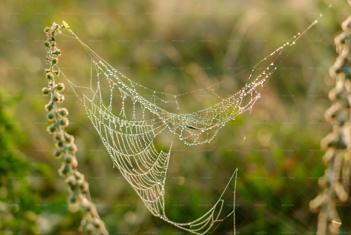 Web In Nature: Stock Photos