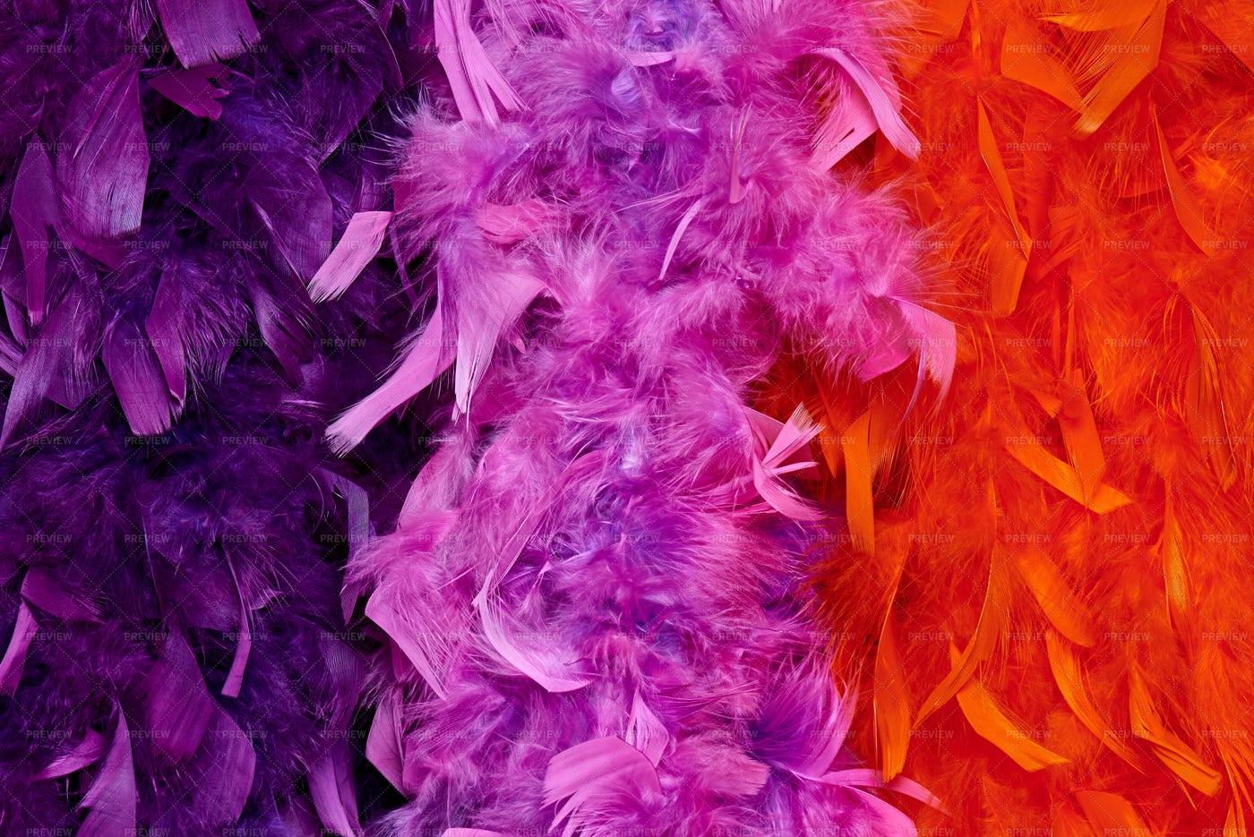 Colored Feather Boas: Stock Photos