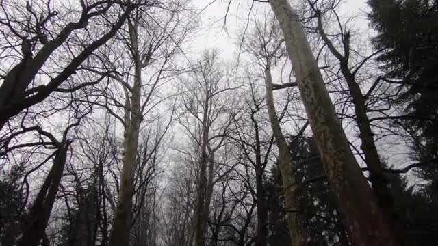 Creepy Forest Low Angle : Stock Video