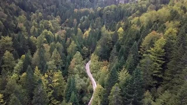 Mountain Forest Road: Stock Video