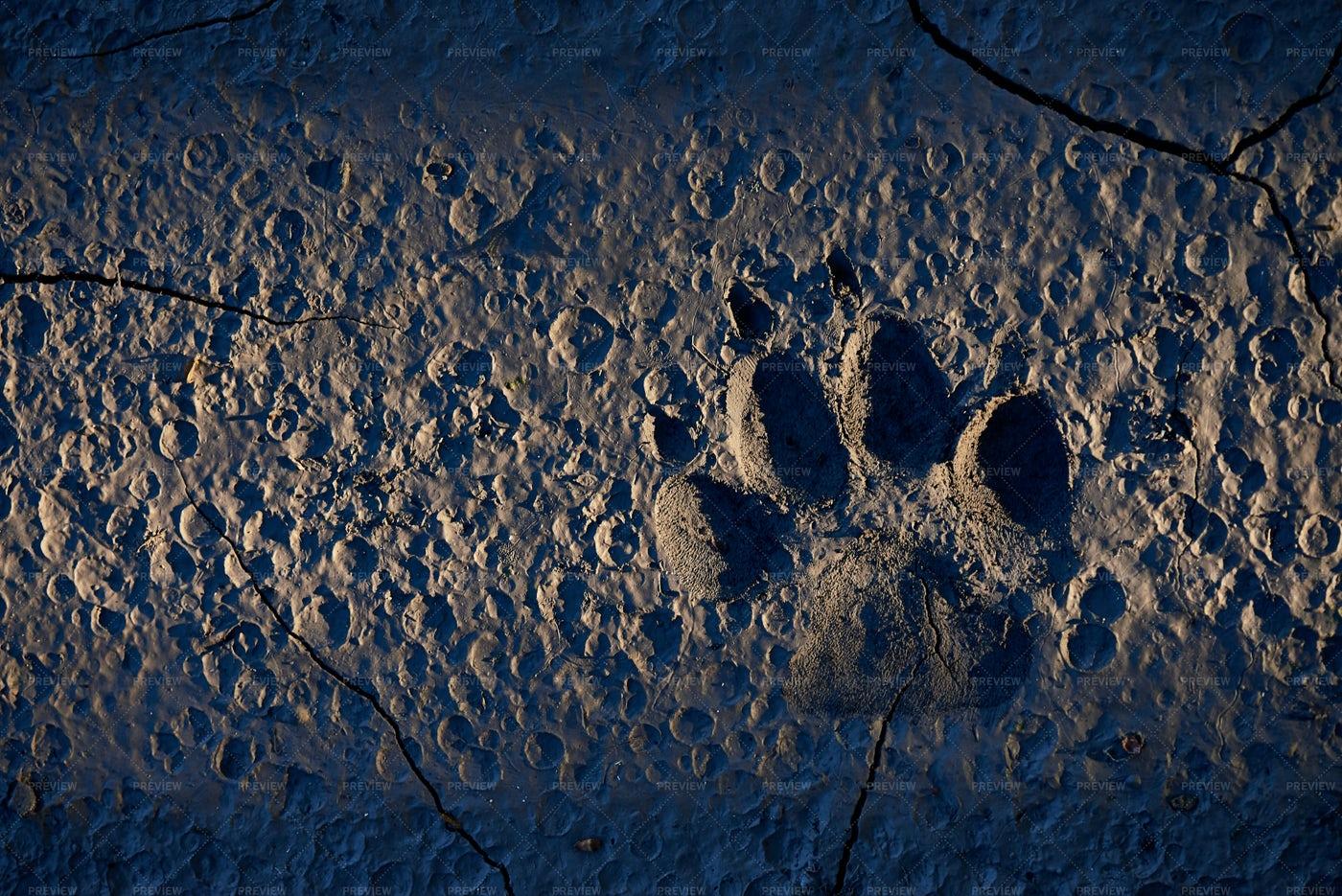 Animal Footprint.: Stock Photos
