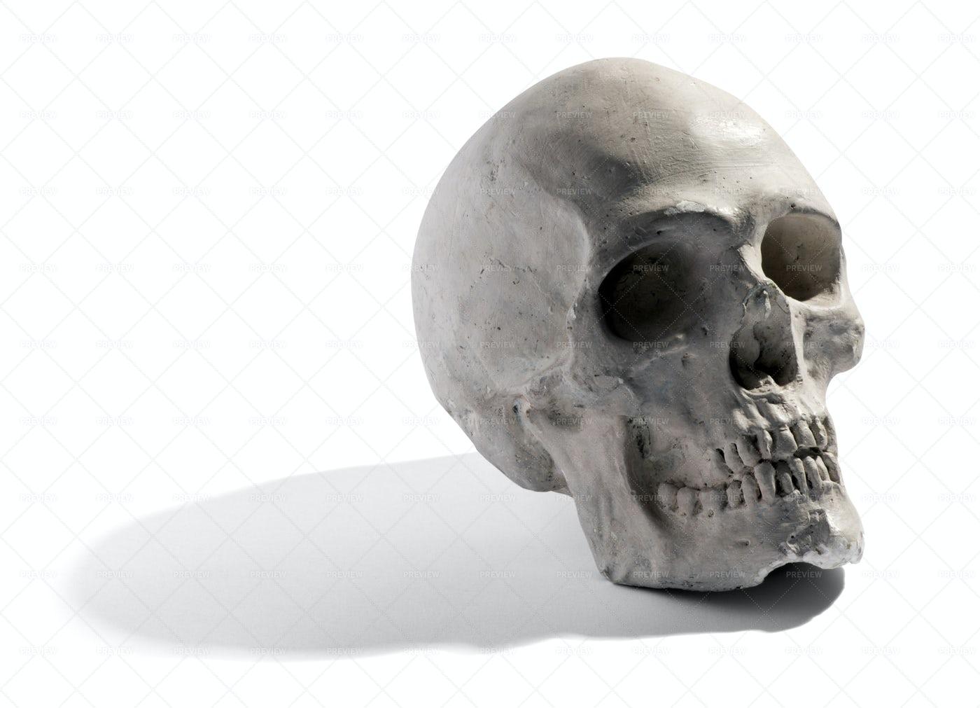 Gray Human Skull: Stock Photos