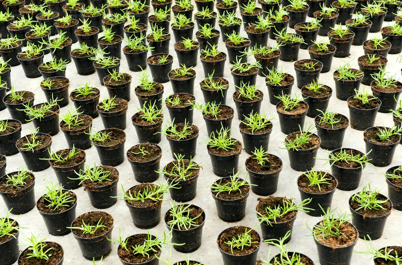 Plants In Pots: Stock Photos