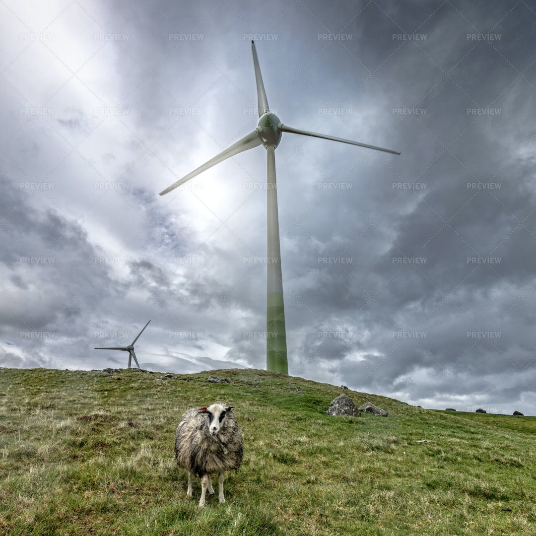 Wind Farm: Stock Photos