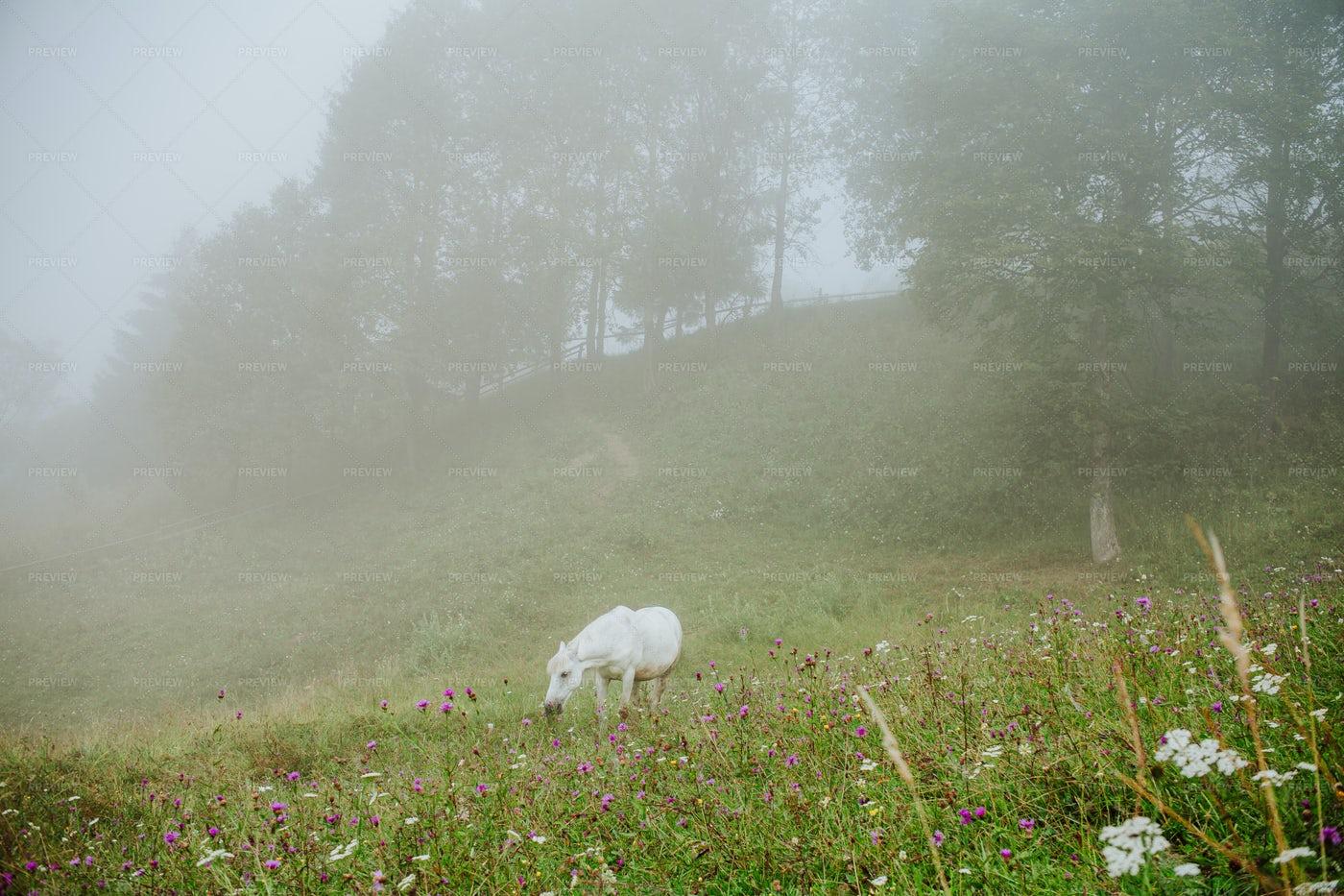 White Pasturing Horse: Stock Photos