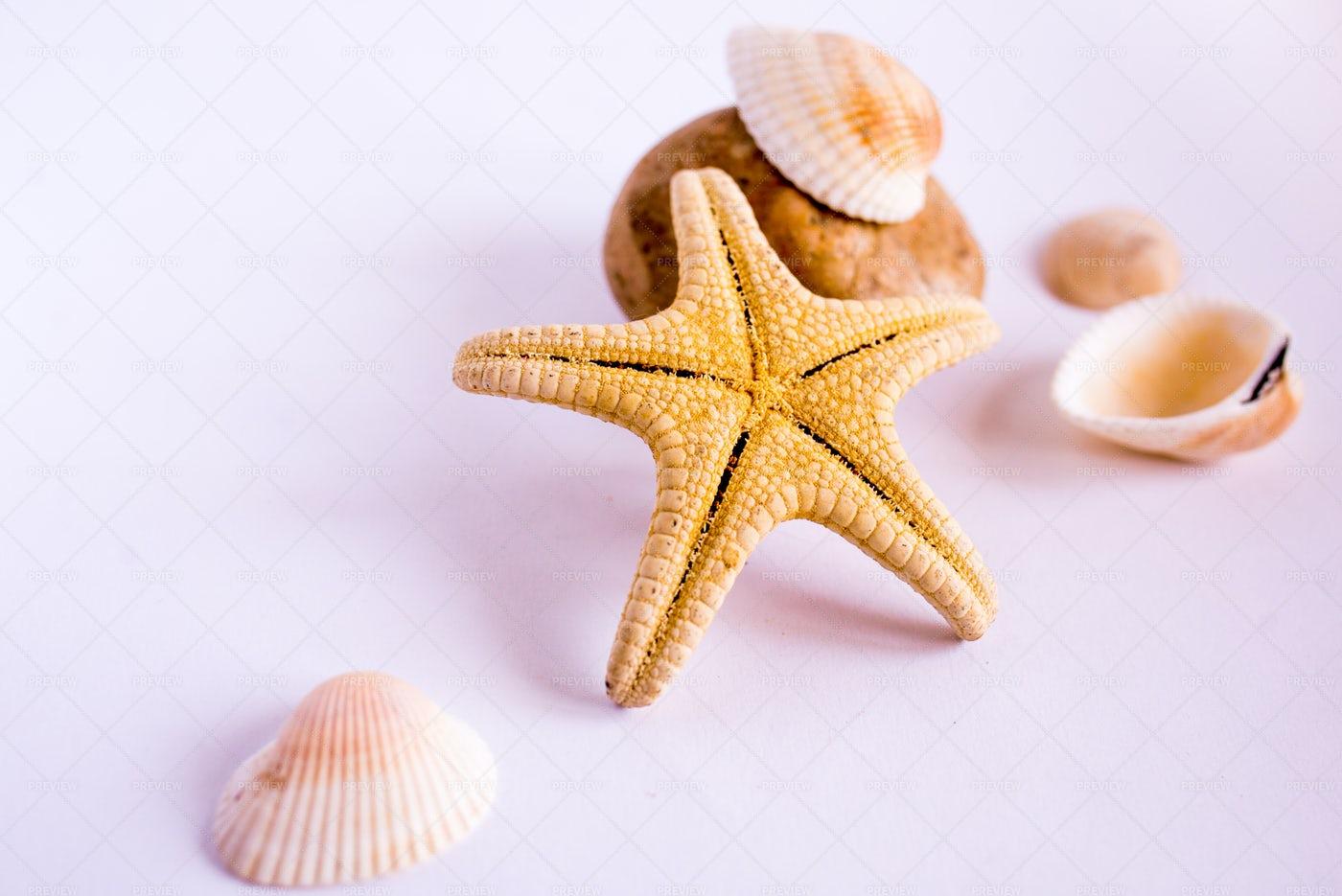 Starfish And Sea Shells: Stock Photos