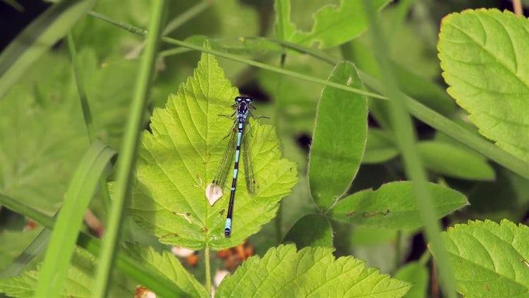 Summer Nature Damselfly: Stock Video