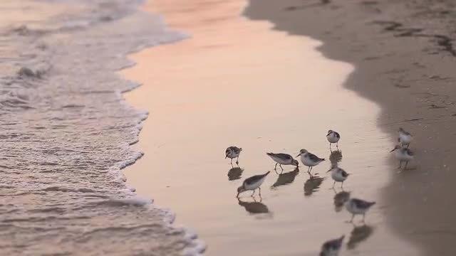 Birds On The Beach: Stock Video