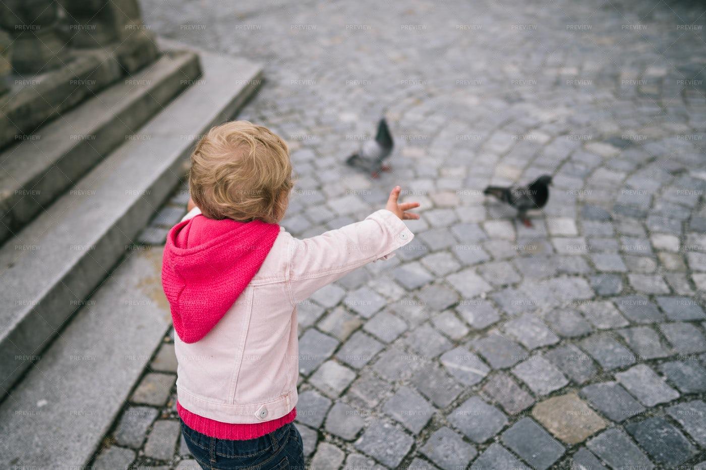 Girl Watching The Pigeons: Stock Photos