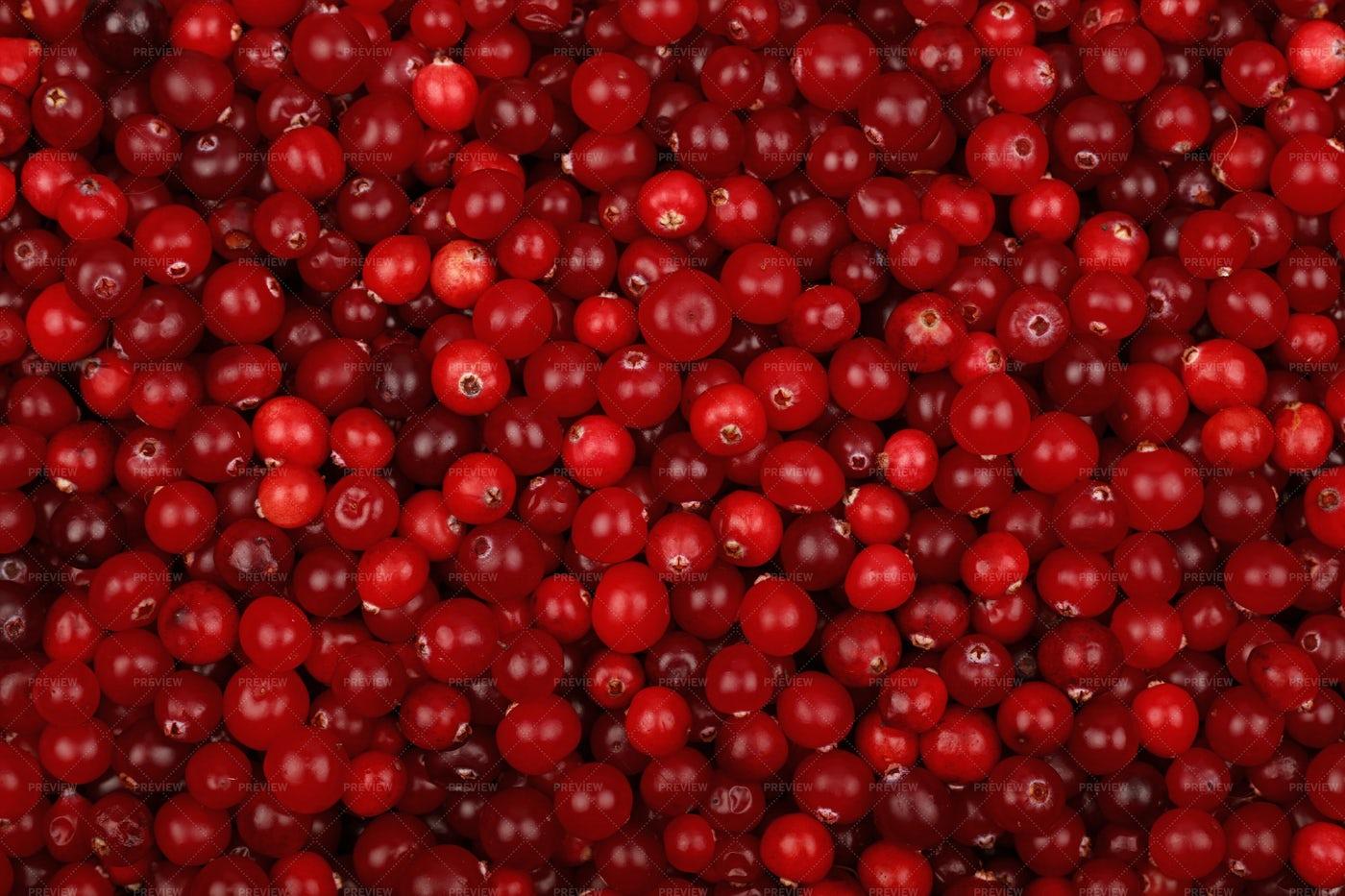 Ripe Cranberries: Stock Photos