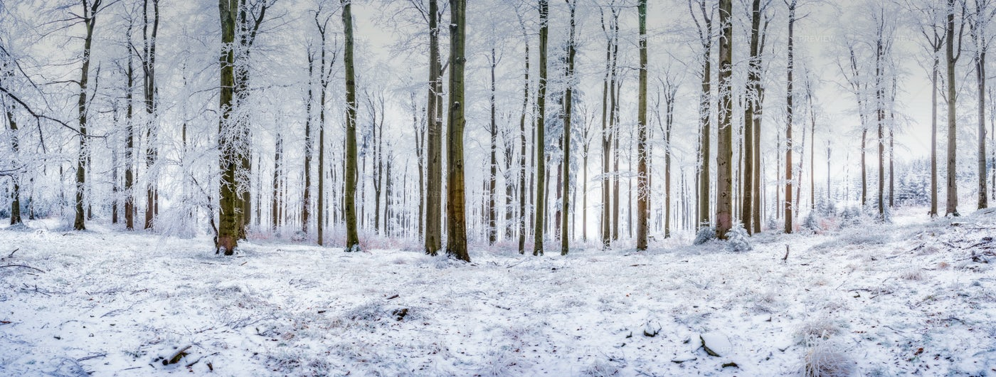Cold Forest: Stock Photos