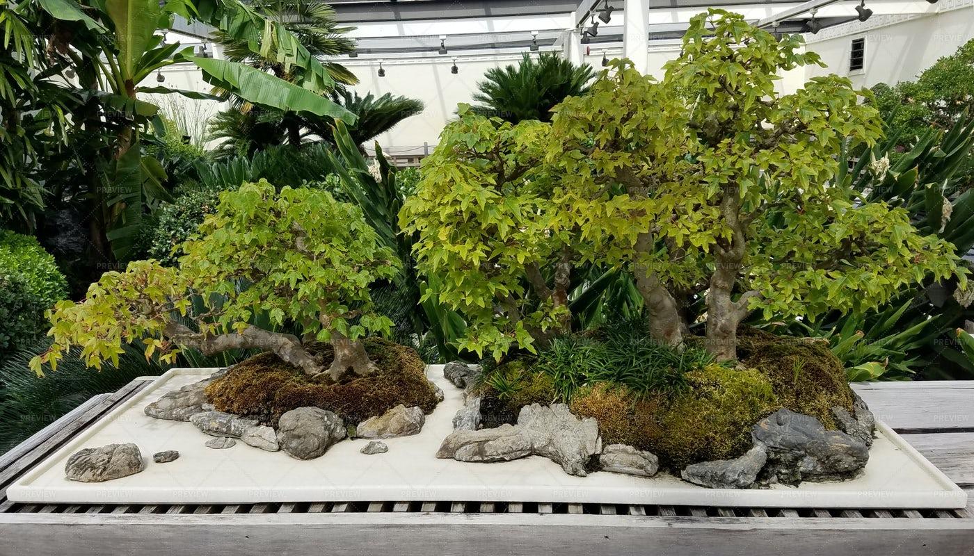 Bonsai Tree Garden: Stock Photos