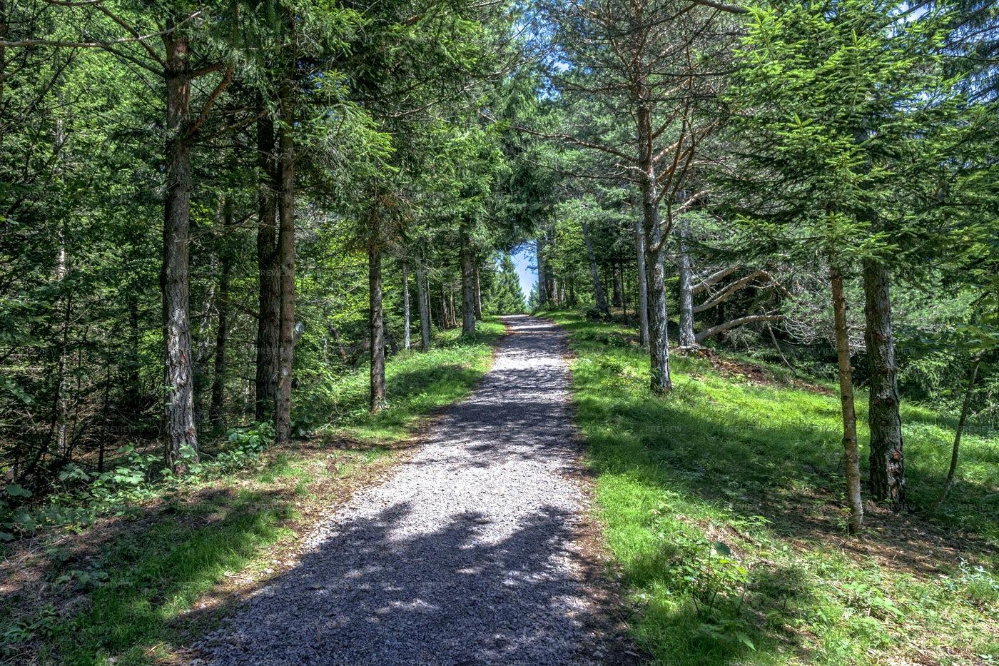 Sciury Pathway View: Stock Photos