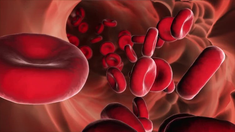 Red Blood Cells: Motion Graphics