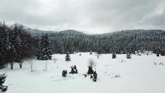 Amazing Winter Nature: Stock Video