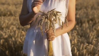 Woman Holding Wheat Bouquet: Stock Video