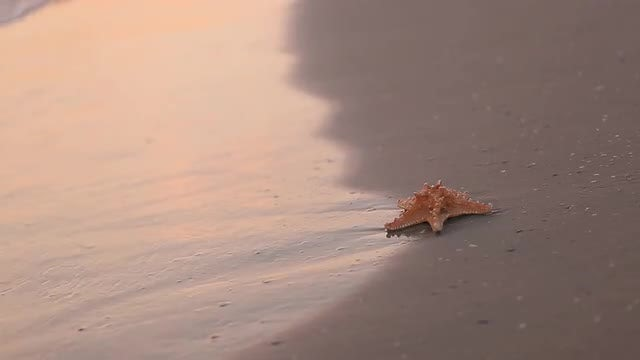 Starfish On The Beach: Stock Video