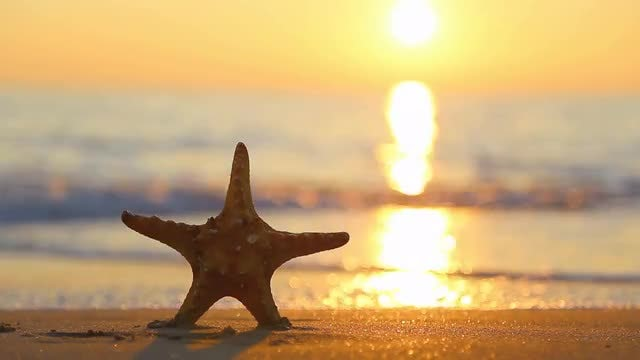 Summer Holiday Starfish : Stock Video