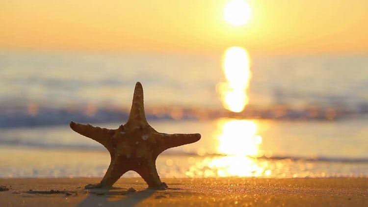 Summer Holiday Starfish : Stock Video