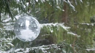 Mirror Ball In The Forest : Stock Video