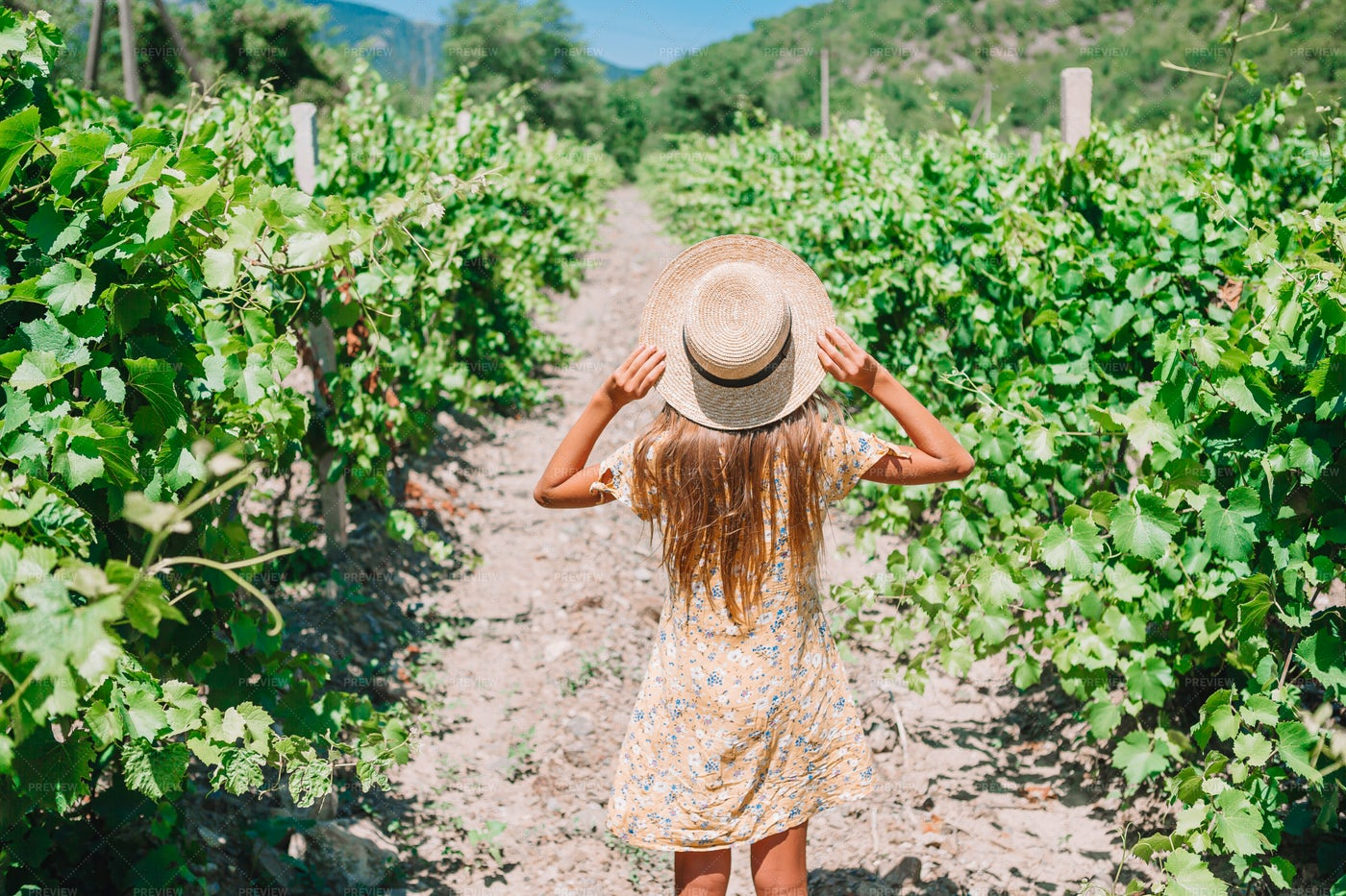 Girl In Vineyard: Stock Photos